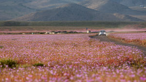 Atacamaöknen den 25 oktober 2015.