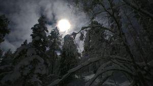 Talvinen metsä yöllä. Puiden oksilla tykkylunta, kuu loistaa taustalla pilviharson läpi.