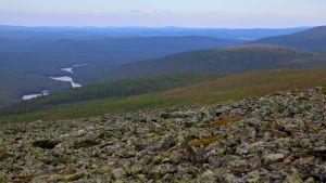 Kuvakulma on tunturin huipulta. Etualalla näkyy Morgam-Viibus-tunturin vanhaa jäkäläistä kivikkoa, taustalla kumpuilee vihreä kesäinen metsämaisema ja Lemmenjoki mutkittelee suvantoineen.