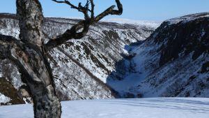 Kuva avautuu suuren kanjonrotkon reunalta talvella. Etualalla on kippurainen vaivaiskoivu ja muutaman metrin kaistale lunta, jonka jälkeen rotko putoaa. Rotkon pohjalla mutkittelee lumi, reunamat ovat graafisen paljaan. Lunta on vain siellä täällä.