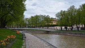 Biblioteksbron i Åbo