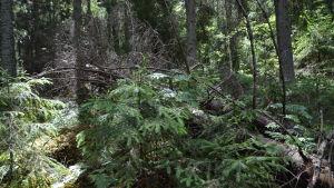 Omkullfallna träd