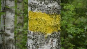 Vandringsled i Dalsbruk utmärkt med gult streck på en björk.