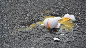 Ägg på marken.