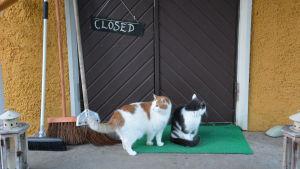 """Pensionat Pangets ytterdörr med skylten """"Closed"""". Två katter framför dörren."""