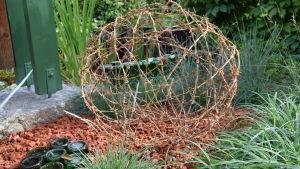 Ett klot av taggtråd i en gräsrabatt med tegelkross som marktäckning