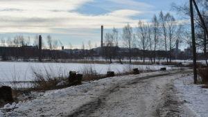 Sjuka träd vid Metviken i Vasa fälldes.