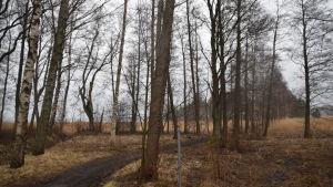 En väg går genom en träddunge på Lilludden i Ingå.