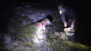 Hund och jägare bredvid död mårdhund.