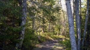 Skogsstig i Södra Vallgrund i Korsholm.
