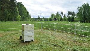 En bikupa på en äng i Snappertuna.