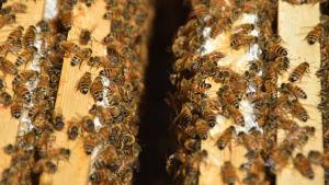 Bin i en bikupa.