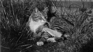 Katten Totti, foto Edith Södergran.