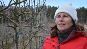 Kvinna granskar knoppar på äppelträd.