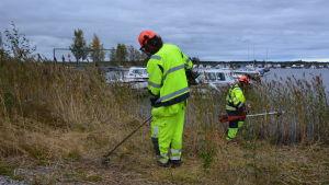 Björn Löv och Antero Bäckman sysselsätts via arbete i rehabiliterande syfte. Här röjer de vass vid Andra Sjön i Nykarleby.