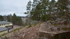 Gränsen mellan skogen och industriområde. Skog och sand.