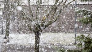 Snöfall i Esbo morgonen den 25.4.2017.
