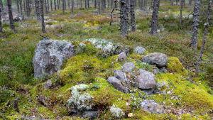 En ryssugn i skogen