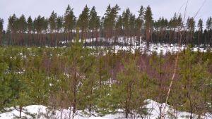 Skog på Emsalö