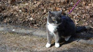 Eija Quinlans katt Zelda, som var bortsprungen i 3 år (11.04.16)