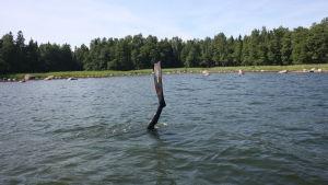 räpylä menee veteen sukelluskalastamassa