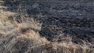torrt gräs och åker som brunnit, närbild