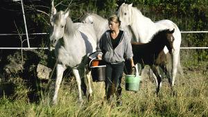 En flicka ger två hästar mat och vatten i en hage.