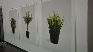 "David Muths konstverk ""Ikea plants (artificial) series"". En trio av bilder på IKEAs plastblommor"