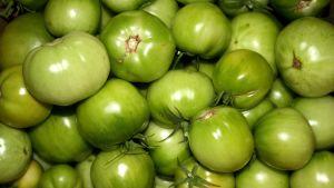 Omogna gröna tomater.