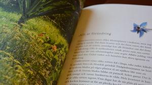 Ett uppslag i Patricia Bruuns bok Mat, medicin och magi