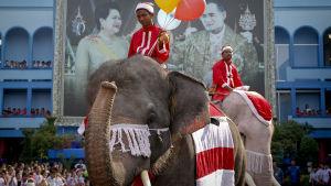 Tomteklädda elefanter och deras skötare i den anrika thailändska staden Ayutthaya norr om huvudstaden Bangkok.