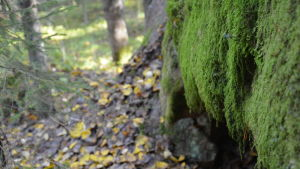 Skog i Kimito