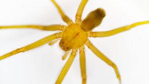 lähikuva ruskohämäkista