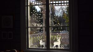 Fönster dekorerat med ritade vita mönster och bilder.