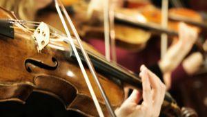 Lähikuva viulusta jota soitetaan.