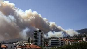 Skogsbränder i Funchal. Madeira.