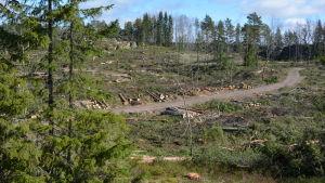 Skogsavverkning i Purunpää på Kimitoön