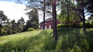 En gammal röd bondgård med vita knutar skymtar bakom grönskande växtlighet.
