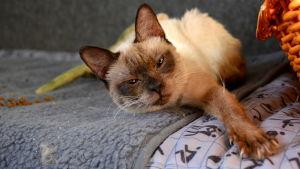 Katten Jessica hittades i en skog i Jalasjärvi.