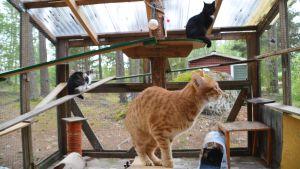Katter i uteburen på Lovisa katthus.