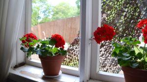 Från fönstret på Lurens karaktärshus ser man vridläktaren.
