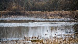 Fåglar simmar i vatten
