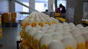 Ägg förpackas.
