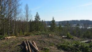 Trädavverkning vid Kråkö sandgrop