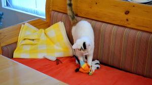 Lekande katt