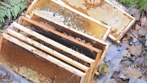 Söndrad bikupa