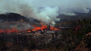 Elden har förstört stora områden bland annat i Cauquenes.