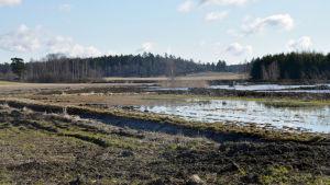En våtmark i ett öppet åkerlandskap.