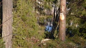 Platsen var bilen körde ut, trädstammen är uppriven.
