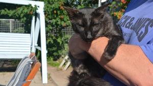Katten Rontti tar Heidi Rosqvist hand om eftersom ägarna inte vill ha den längre.